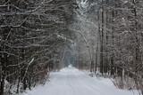 Leśna droga zimą.