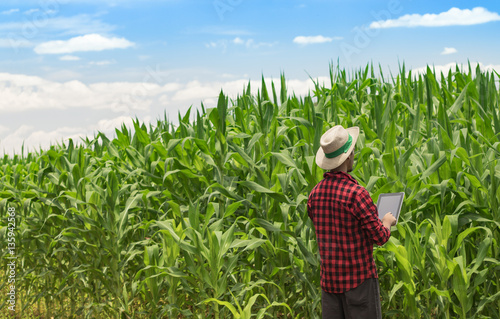 Farmer with hat using digital tablet computer in cultivated corn field plantation. Modern technology application in agricultural growing activity. Concept Image.
