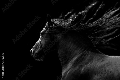 Black horse running on black background