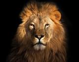 Król lew na czarnym tle