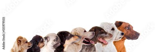 Reihe verschiedene Hundeköpfe im Profil