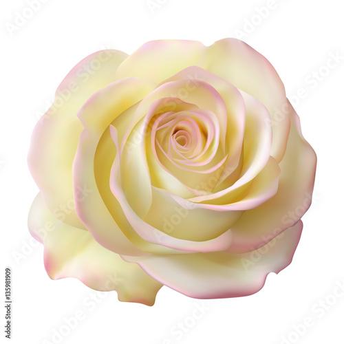 Реалистичная кремовая роза, бутон
