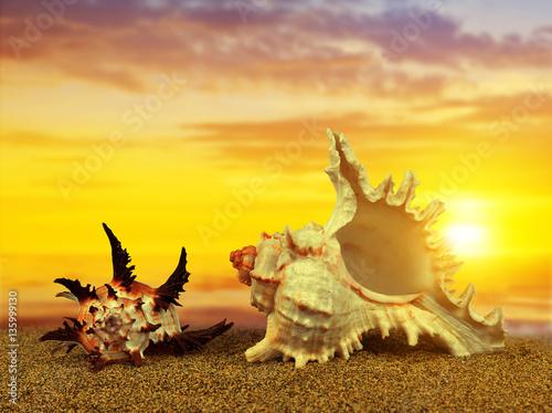 Plakat Tropical sea shells on sandy beach at sunset.