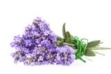 Violet  lavendula flowers isolated on white background, close up