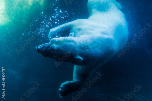 Canvas Ijsbeer Polar Bear Diving