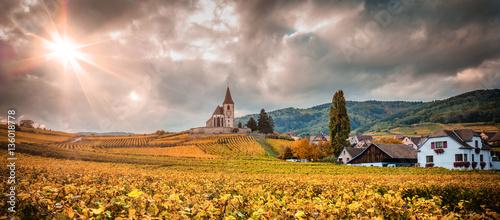 Plexiglas Wijngaard Paysage du vignoble alsacien
