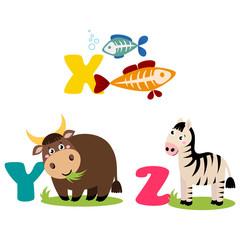 A vector illustration of alphabet animals from X to Z. Vector illustration for kids education, foreign language study.