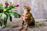 bengal cat with spring flowers