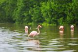 Flamingo in Mexico