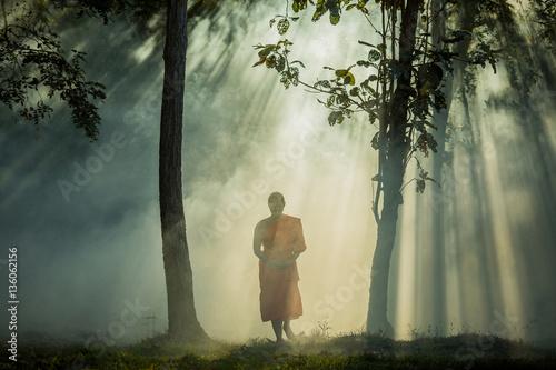Vipassana meditation monk walks in a quiet forest. Poster