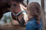 Cute girl feeding her horse in paddock - 136062579