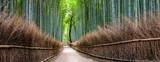 Japanischer Bambuswald in Kyoto Sagano Arashiyama, Japan