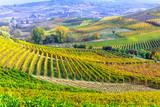 impressive vineyards of Tuscany - famous vine region of Italy