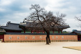 The colorful wall in the garden of Gyeongbokgung Palace in Seoul