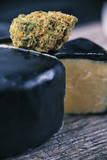 Dried cannabis bud (Cheese strain) - medical marijuana edibles c