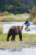 Brown Bear with fly fisherman