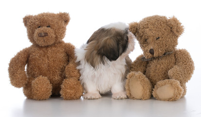 cute puppy snuggled between two teddy bears