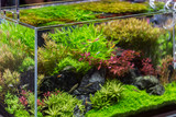 decorative aquarium with plant from glass - 136115759