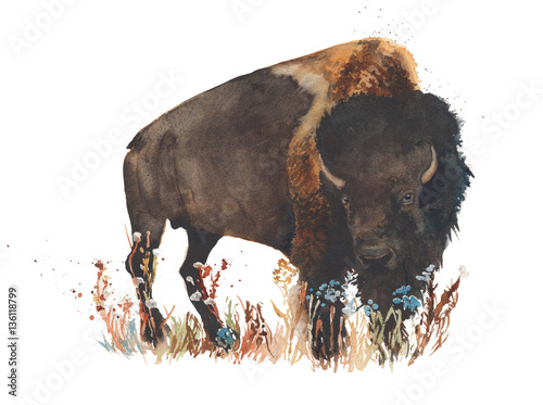 Bison buffalo bull wild animal watercolor painting illustration isolated on white background - 136118799
