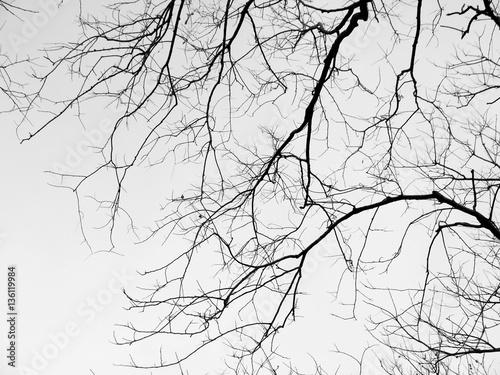 szare-galezie-drzewa