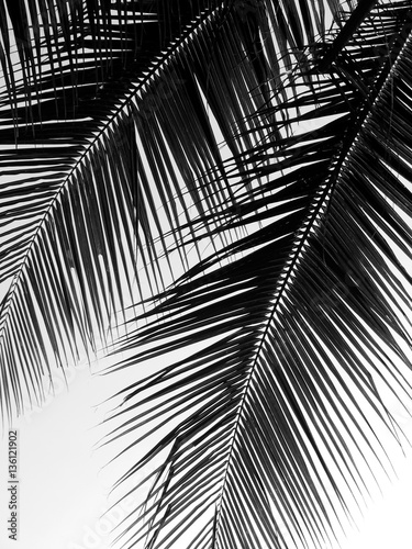 beautiful palms leaf on white background - 136121902