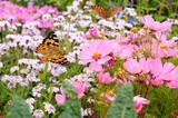 Schmetterling 236