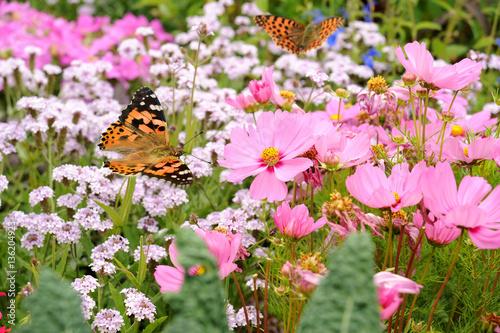 Deurstickers Purper Schmetterling 236