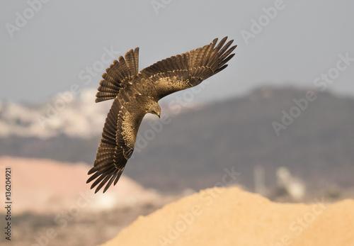 Poster migratory birds in Israel