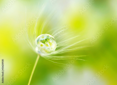 Fototapety, obrazy : Rain drop dew on a dandelion seed in the wind  with reflection of flowers daisies on a meadow outdoors spring macro summer with soft focus.  Amazing delicate fresh air artistic image.