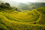 Curve Rice field on terrace