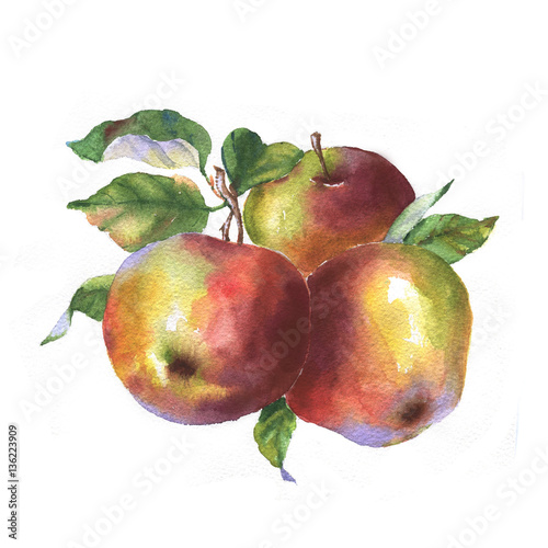 Tasty red watercolor apples. Hand drawn illustration of the isolated red apples. Autumn fruits harvest - 136223909