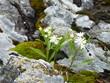 Wild flowers on a rock near Wawa Ontario Canada