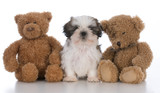 cute puppy securely tucked between two teddy bears