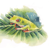 Frog red-eyed tree frog on leaf watercolor illustration isolated on white background