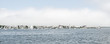 Nantucket Long Pier