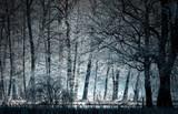 bosco in inverno