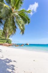 cocotier sur plage d'anse Lazio, Praslin, Seychelles