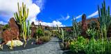 Panoramic view of Cactus garden - popular attraction in Lanzarot