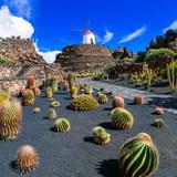Cactus garden- popular attraction in Lanzarote, Canary island