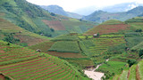 green rice terrace