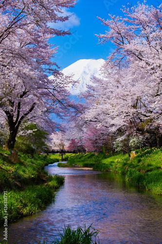 Poster Japanese Sakura and Mt. Fuji