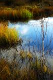 scene with tundra lake