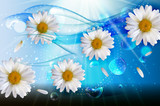 Abstract Chamomile Flowers Natural Spring and Summer Background