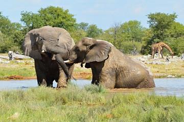 Playing Elephant in the Etosha Nationalpark