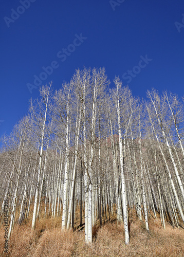 Autumn leafless trees on a sunny day