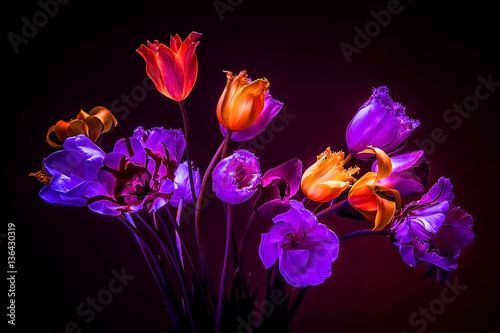 Neon colors in the dark. Tulips on a black background. Flowers f