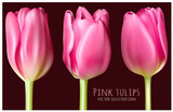 Spring pink tulips vector illustration