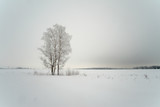 Snowy tree in a field