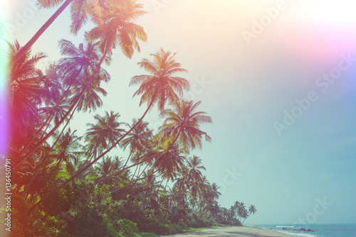 Fototapeta Empty remote tropical beach with exotic coconut palm trees vintage color stylized with film flare light leaks
