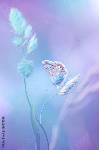 Zdjęcia na płótnie, fototapety na wymiar, obrazy na ścianę : Beautiful light-blue butterfly on blade of grass on a soft lilac blue background.  Air soft romantic  dreamy artistic image spring summer.
